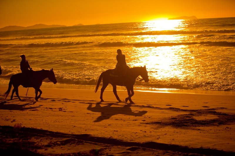 Another Side Of San Go Tours Horseback Riding